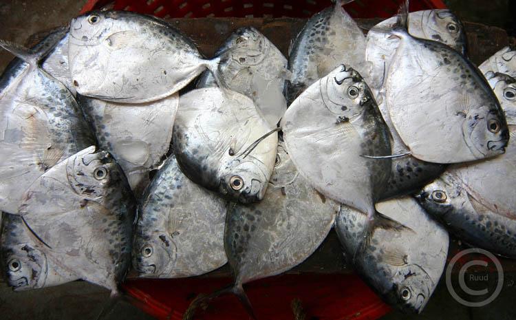 india-vissen.jpg